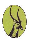Matsuri Safaris