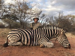 Zebra hunted in July 2017 at Matsuri Safaris