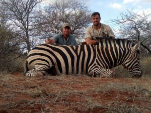 Zebra hunted in July 2017 | at Matsuri Safaris